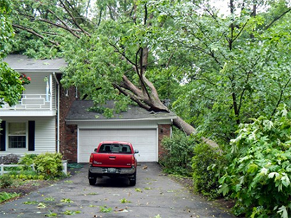Oak Tree fallen on house needs tree removal