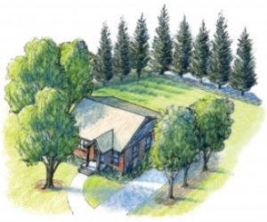 Arborist-plans-for-tree-planting
