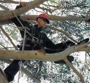 Tom-Arrington-Climber