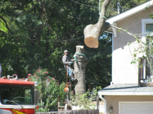 Pleasant Hill Oak removal