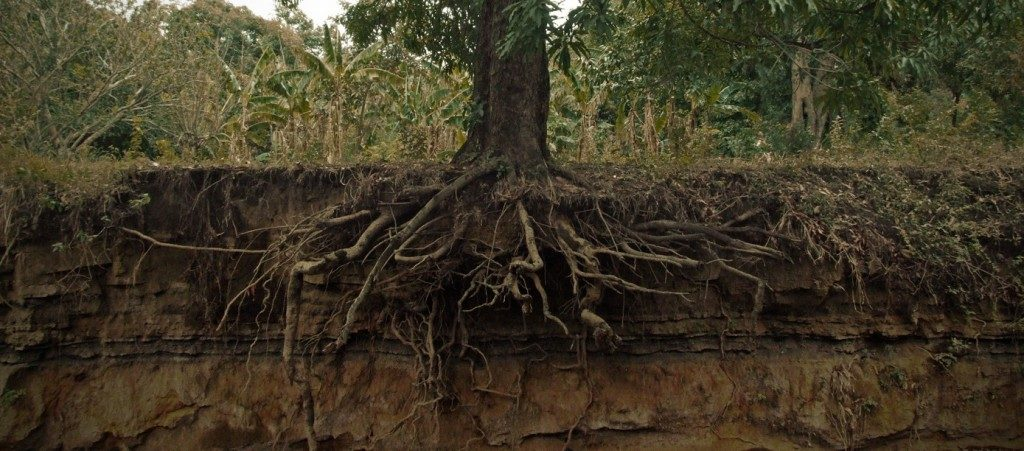 tree-roots-side-view