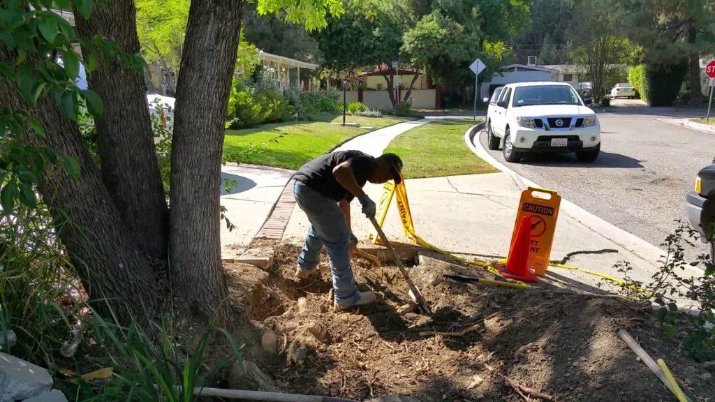 uplifting tree roots sidewalk