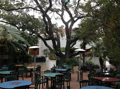 Oak Tree in restaurant setting