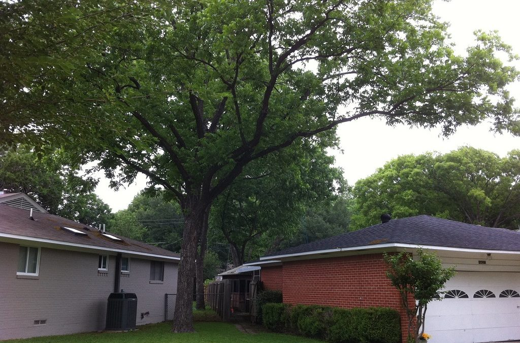 Homeowner tree responsibility with overhanging branches