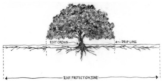 Drip Line - Root Zone - Drought -Conditions
