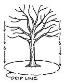 drip-line tree removal permit