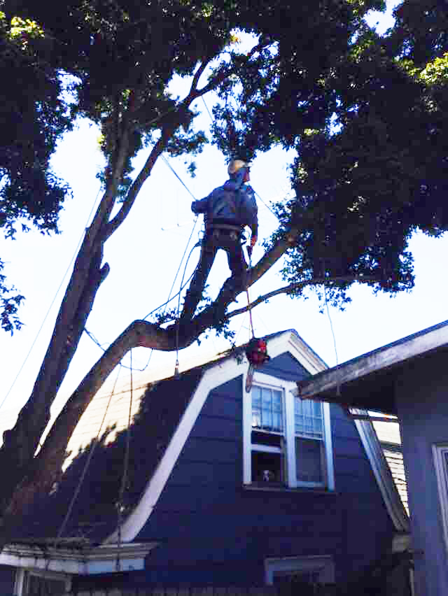 tree Removal Richmond