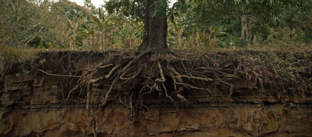 Cutting Tree Roots El Sobrante Tree Service Arborist