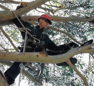 Bay Arborist tom Arrington