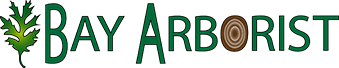 Bay Arborist